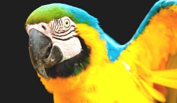 Чудо в перьях: попугай от скуки вызвал полицию