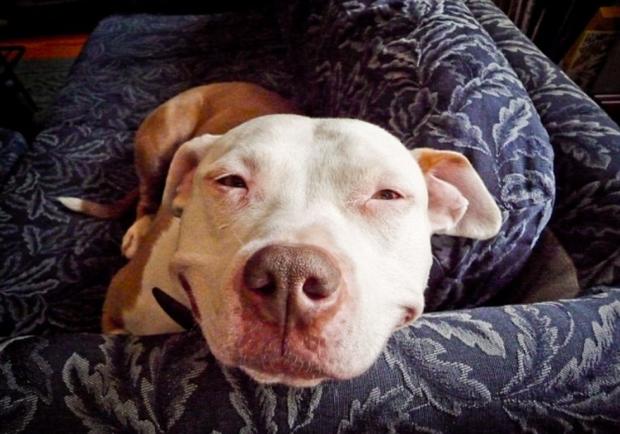 Знайшли дивовижного собаку, здатного подарувати людству відразу дві посмішки