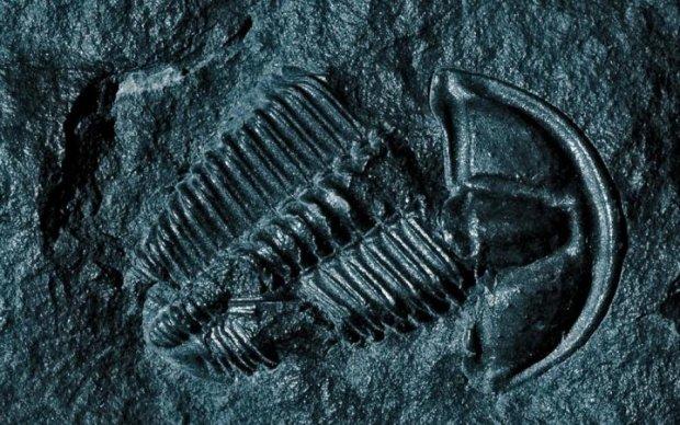 В Арктике обнаружили следы девонского вымирания