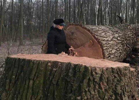 У Голосіївському парку зрубали 17 дубів, фото з фейсбук