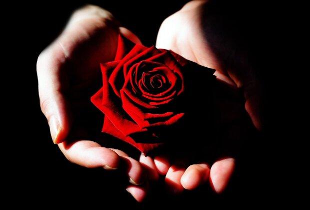 роза, фото Pxhere