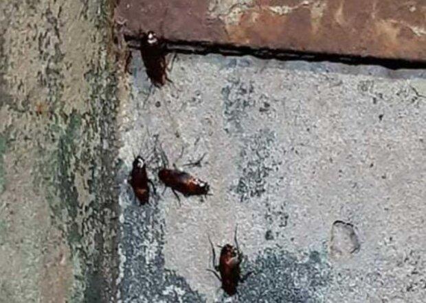 Тараканы, скриншот: Facebook / Черкаси - Митниця