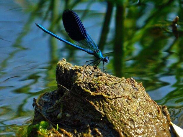 Днепровский фотограф заснял настоящую красотку — блестящие крылышки и тонкие лапки