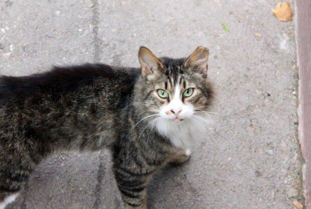 Котик, фото pxhere