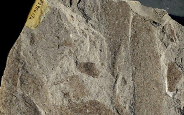 Останки праотцов жизни на Земле нашли в Африке