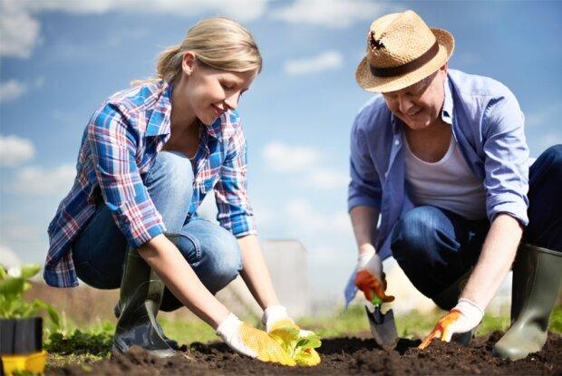 Знайдено найкращий засіб для боротьби зі шкідниками: дачники рекомендують