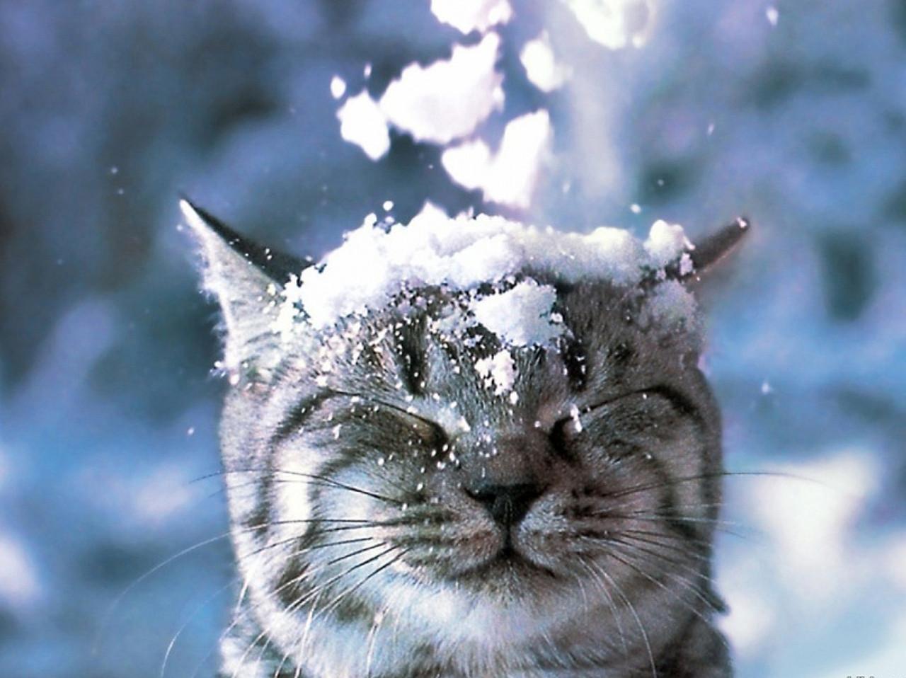 Смешные картинки зима