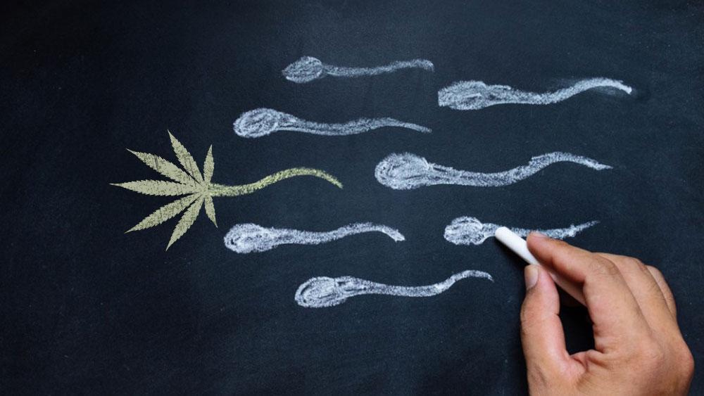 Влияние марихуаны на сперматозоиды песня петлюры под гитару конопля