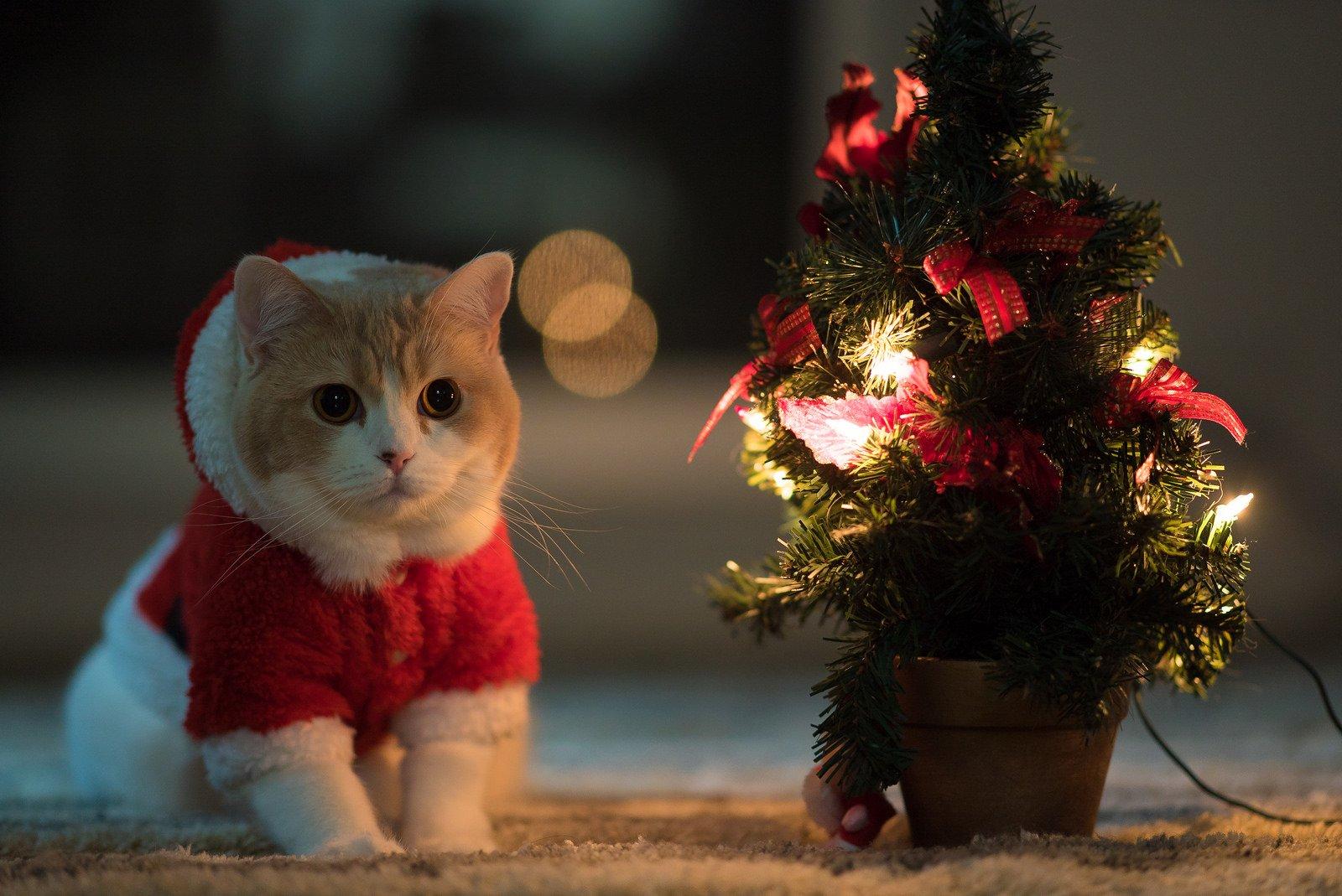 Самые лучшие новогодние картинки на аву