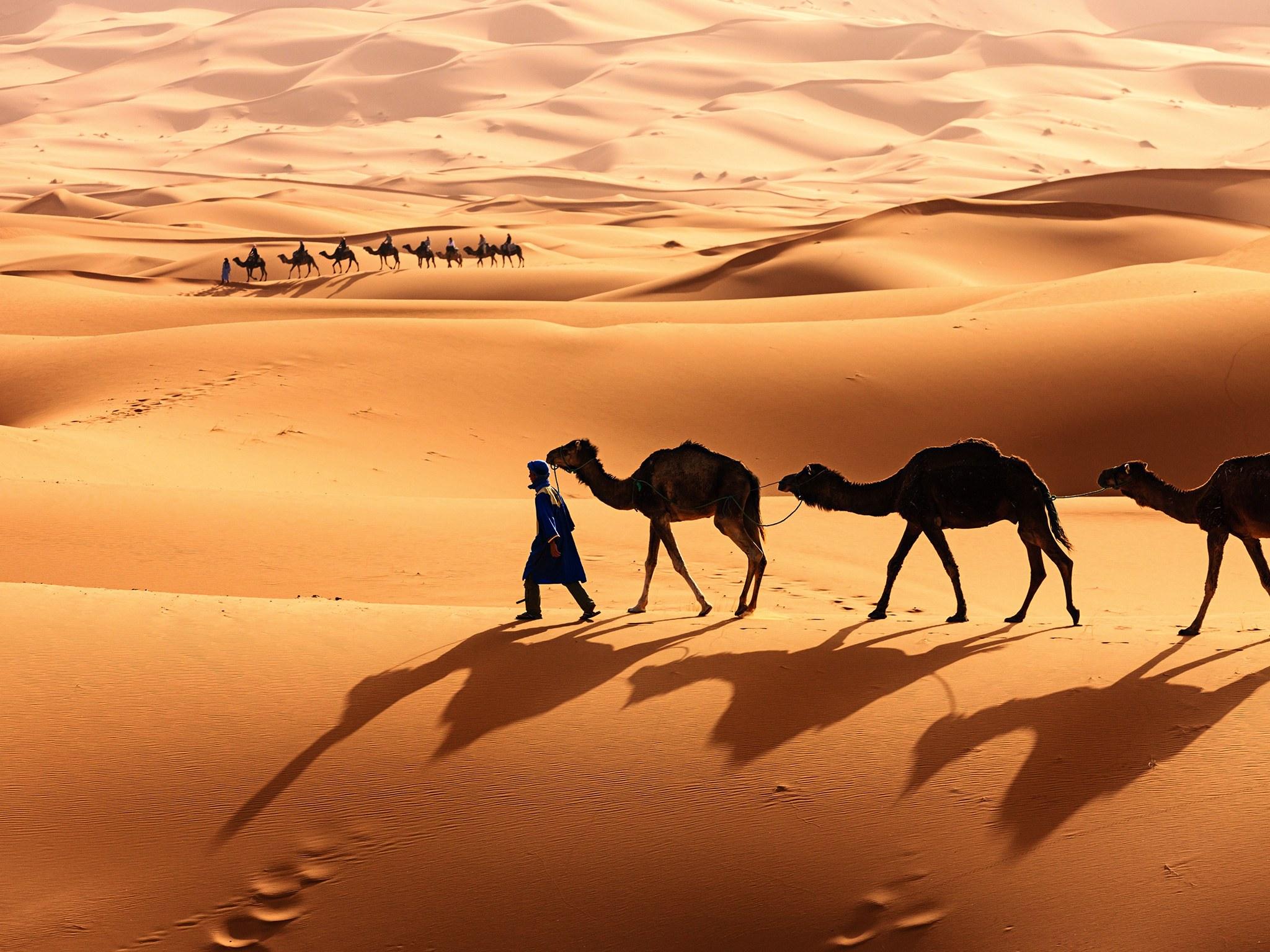 просто, постер пустыня и верблюды и люди будете просто жарить