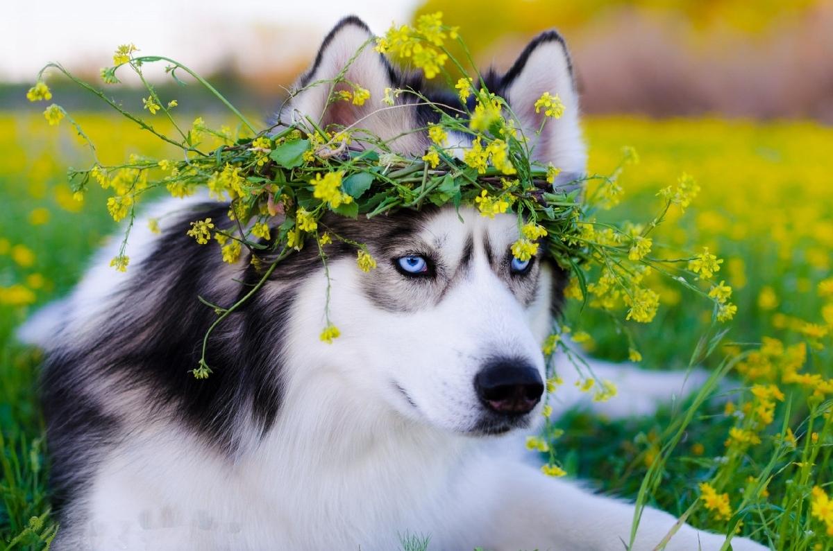 могу весна картинки с собаками это явление