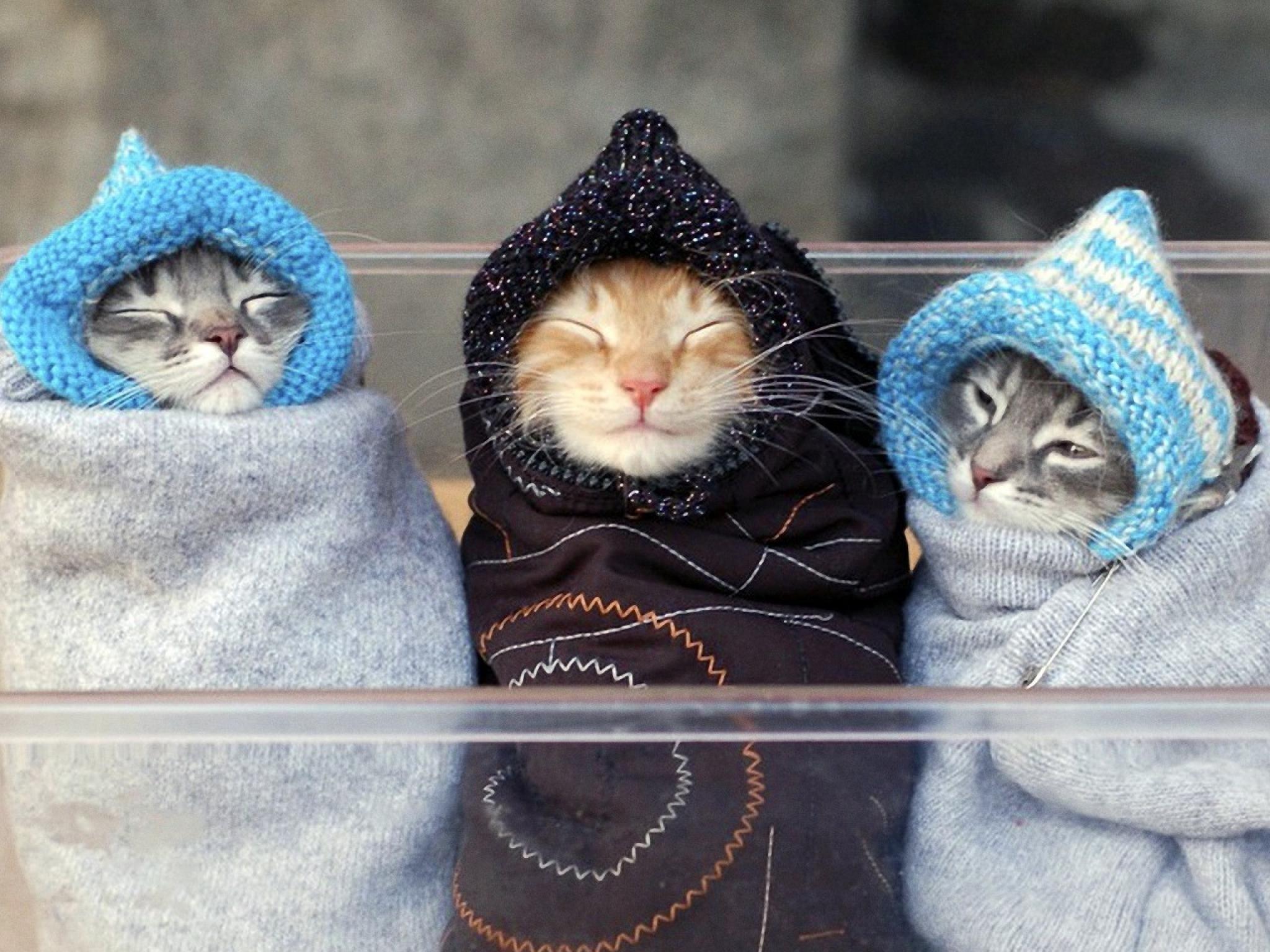 Смешные картинки на тему котики