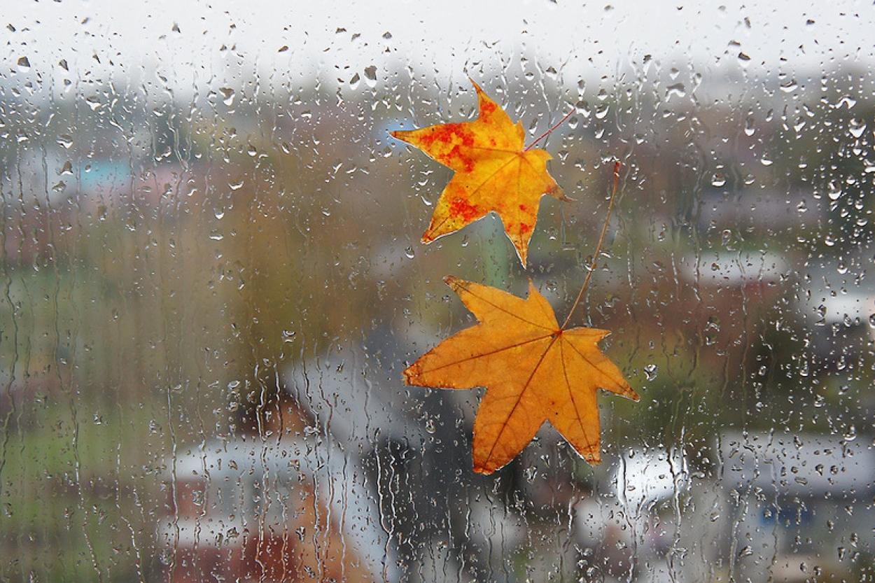 Картинки плохой погоды осенью, открытка днем рождения