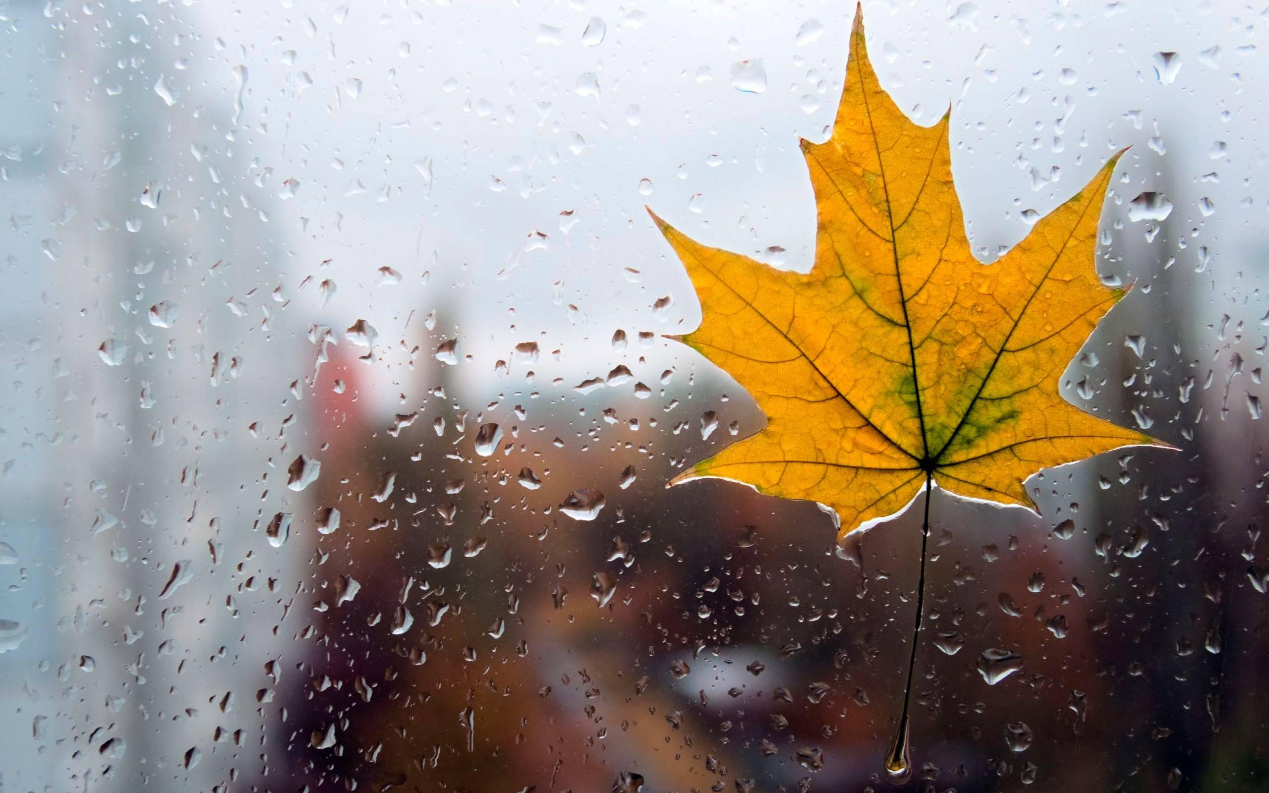картинка погода на осень приходом более удобной
