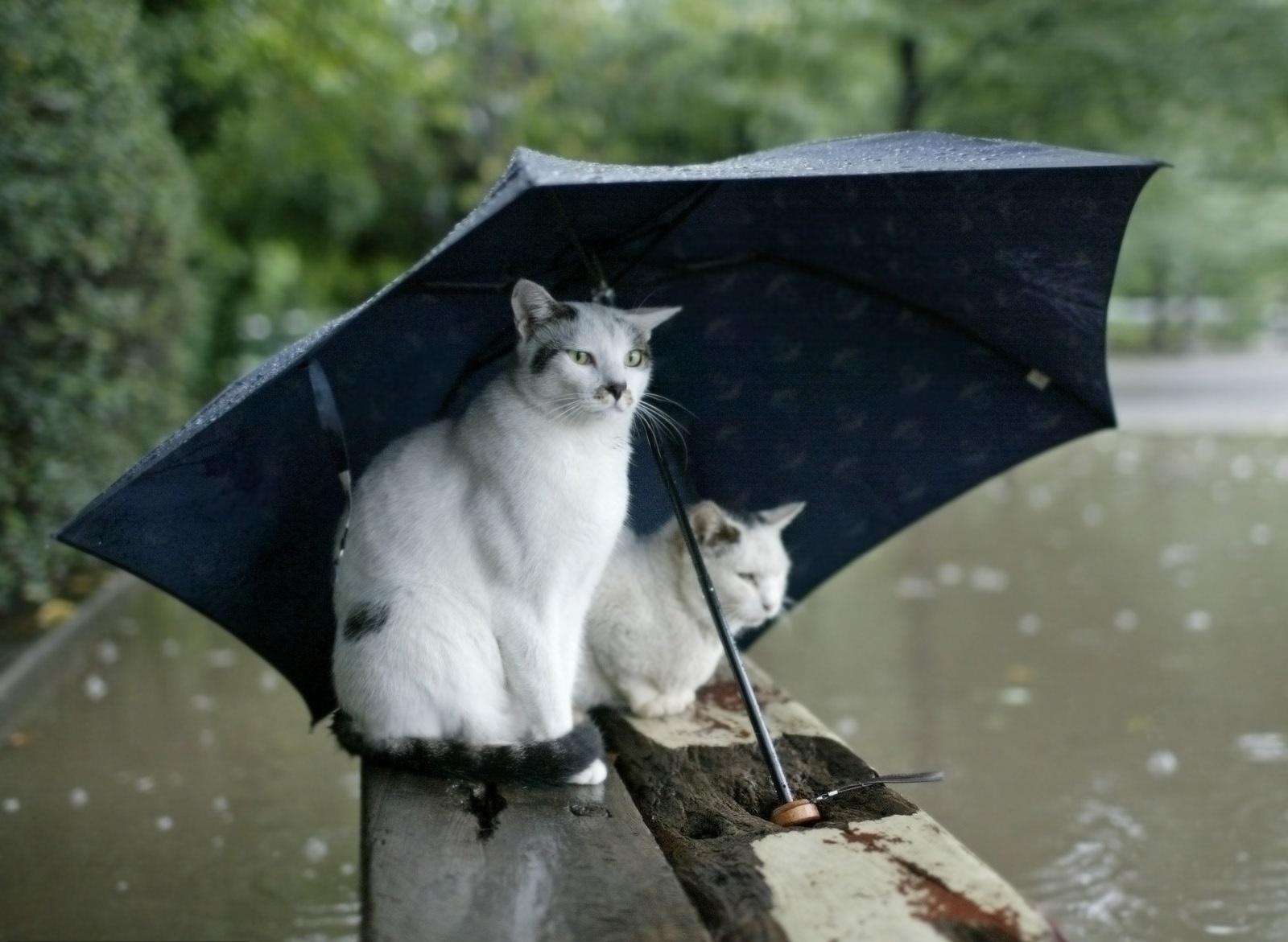 это картинка с кошкой на хорошей погоде доме- ведь